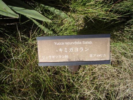 キミガヨラン
