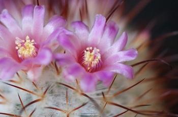 豊明丸の花