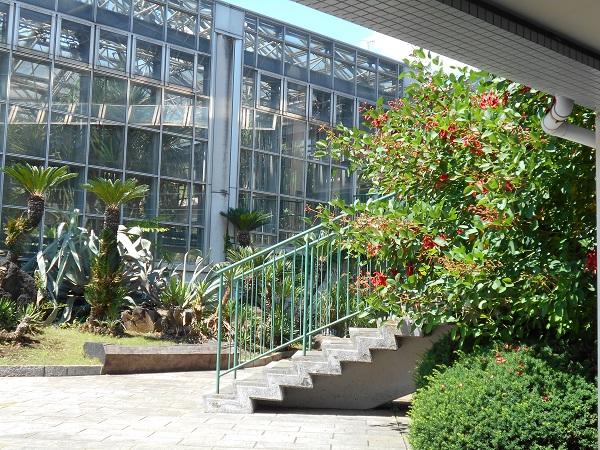 市川動植物園の鑑賞植物園で咲いていたマルバデイゴ
