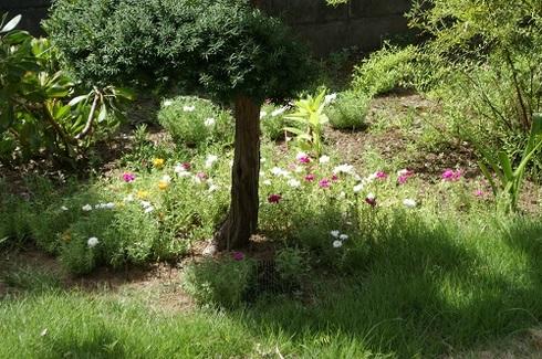 8月の庭.JPG